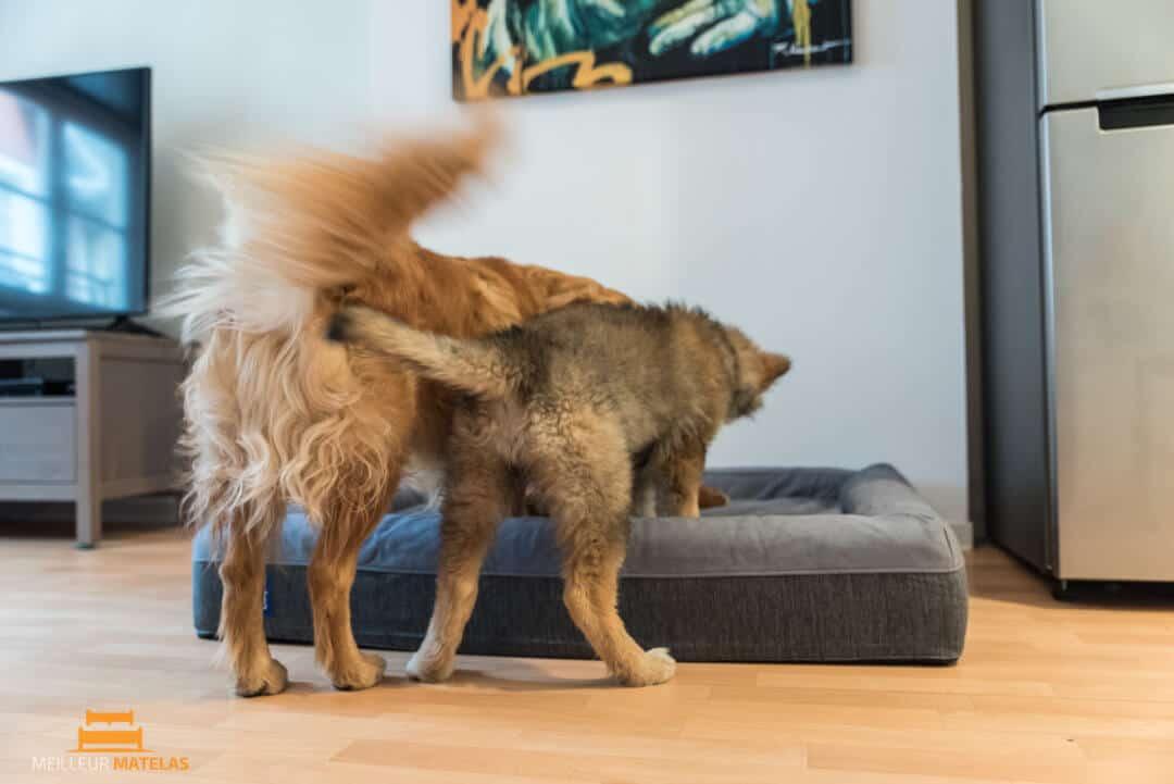 lit pour chien casper notre avis sur ce matelas pour chien. Black Bedroom Furniture Sets. Home Design Ideas