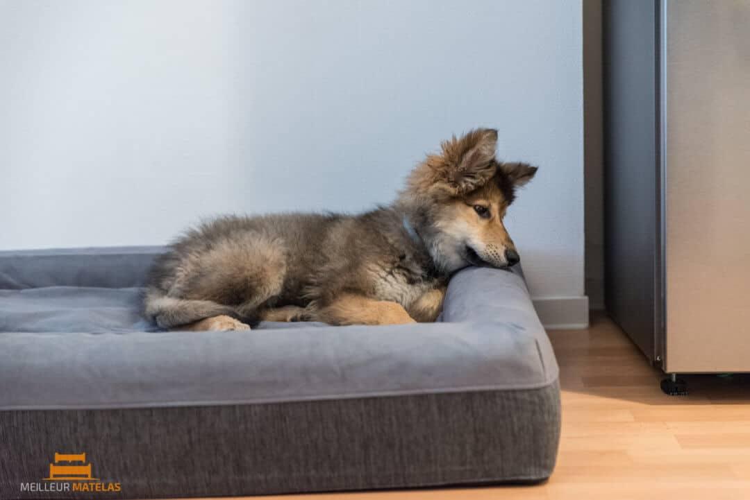 lit pour chien casper notre avis sur ce matelas pour chien meilleur matelas. Black Bedroom Furniture Sets. Home Design Ideas
